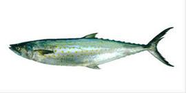 Свежемороженная рыба, макрель, лангустины и креветки из Южной Ам 6
