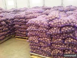 Картофель от Производителя! С Доставкой по Украине! 2
