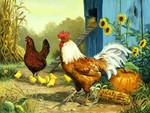 Домашняя и декоративная птица