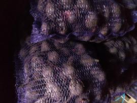Картофель оптом 5+ из кфх Краснодара 5