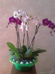 Продаю композицию из орхидей