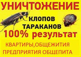 Уничтожение тараканов,клопов,крыс.Хим.препараты.