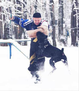 Дрессировка собак в Кунцево - защитная дрессировка