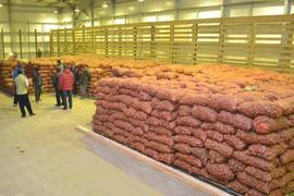 Картофель от Производителя! С Доставкой по Украине!