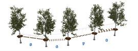 Веревочный парк на деревьях D2-16 2