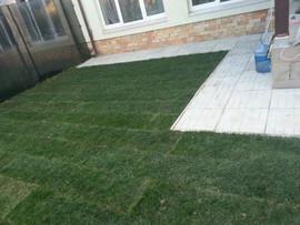 Купить газон по оптовой цене в Москве 4