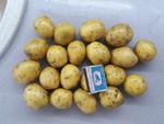 Обмен семенного картофеля на автомобиль