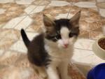Отдадим котенка в хорошие руки