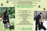 Дрессировка собак в Крылатском-Кунцево