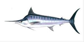 Свежемороженная рыба, макрель, лангустины и креветки из Южной Ам 4