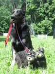Дрессировка собак в Москве в Кунцево, Крылатское. Площадка для с