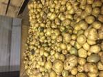 Мытый картофель Гала второй сорт