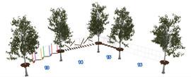 Веревочный парк на деревьях D2-16 4