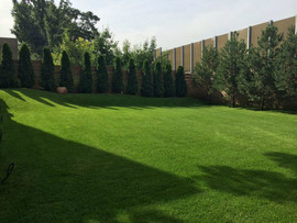 Купить газон по оптовой цене в Москве 2