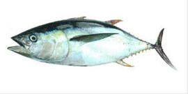 Свежемороженная рыба, макрель, лангустины и креветки из Южной Ам 2