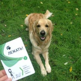 Карточки для дрессировки собак - карманный самоучитель! 4