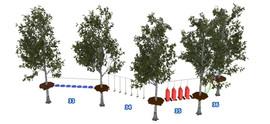 Веревочный парк на деревьях D2-16 9