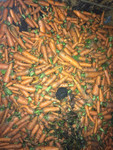 Морковь мытая, лом на переработку или корм