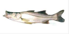 Свежемороженная рыба, макрель, лангустины и креветки из Южной Ам 5