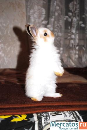 Продолжительность жизни декоративные кролики в домашних условиях